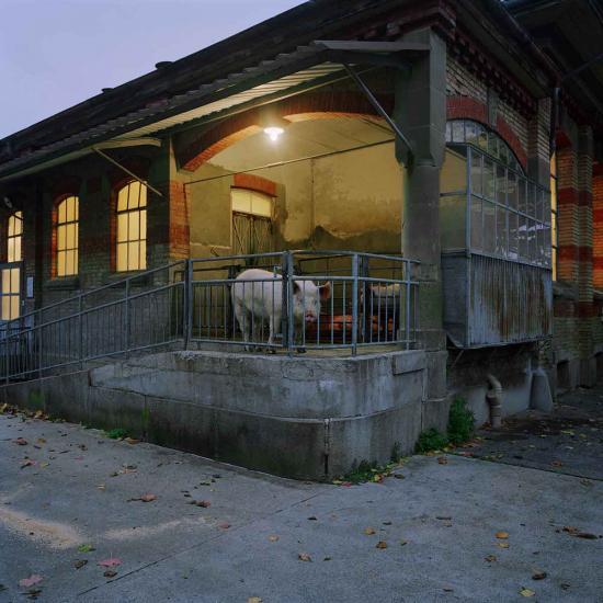 Reportage avant la fermeture des abatoirs de Payerne