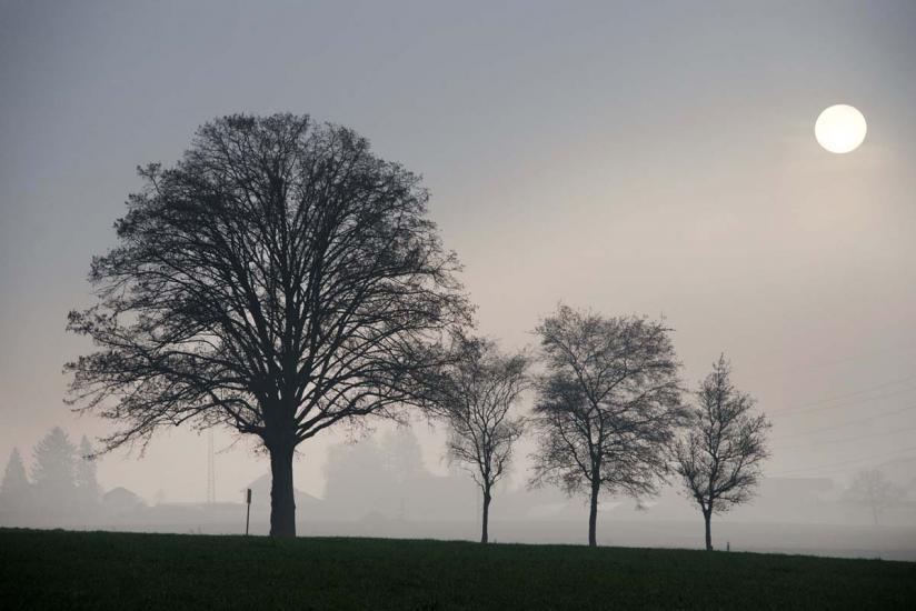 Brouillard dans la plaine de la Broye